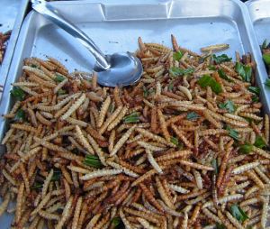 Deep-fried bamboo worms  - Thailand