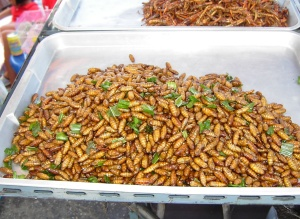 Deep-fried chrysalis - Thailand