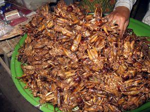 Fried crickets - Cambodia